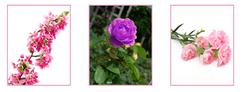 rosa webquest portada